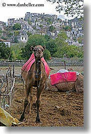 camels, europe, kaya koy, turkeys, vertical, villages, photograph