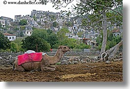 camels, europe, horizontal, kaya koy, turkeys, villages, photograph