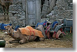 camels, europe, horizontal, kaya koy, lounging, turkeys, photograph