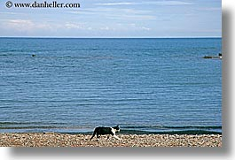 beaches, cats, europe, horizontal, phaselis, turkeys, photograph