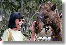 beryl, camels, europe, horizontal, laugh, senior citizen, sunglasses, tourists, turkeys, womens, photograph