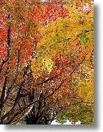 fujipix, fall, horizontal, trees, fall, fujipix, trees, photograph