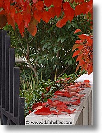 leaves, fujipix, fence, horizontal, leaves, fujipix, fence, photograph