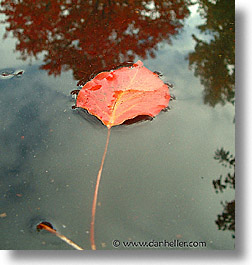 floating, fujipix, horizontal, leaf, floating, fujipix, leaf, photograph