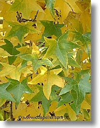 green, leaves, fujipix, horizontal, yellow, green, leaves, fujipix, yellow, photograph
