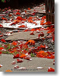 leaves, fujipix, red, horizontal, leaves, fujipix, red, photograph