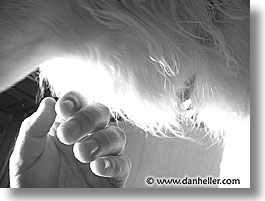 pooches, pooch, fujipix, hand, horizontal, hair, dogs, fujipix, hand, hair, dogs, photograph