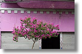 argentina, buenos aires, horizontal, la boca, latin america, painted town, pink, trees, photograph