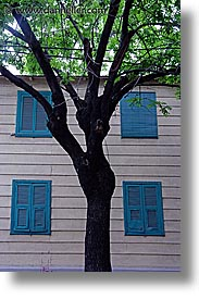 argentina, buenos aires, la boca, latin america, painted town, trees, vertical, windows, photograph