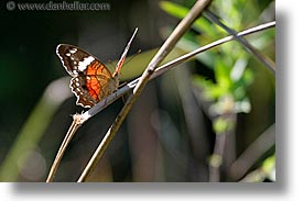 animals, argentina, butterflies, horizontal, iguazu, latin america, photograph
