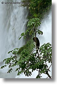 animals, argentina, iguazu, latin america, vertical, photograph