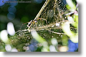 animals, argentina, horizontal, iguazu, latin america, spider, photograph