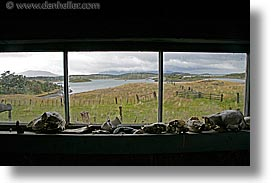 argentina, bones, horizontal, latin america, tierra del fuego, windows, photograph