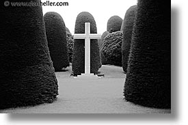 chile, crosses, graveyard, horizontal, latin america, punta arenas, trees, photograph