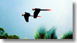 birds, costa rica, horizontal, latin america, photograph