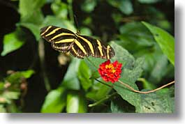 butterflies, costa rica, horizontal, latin america, photograph