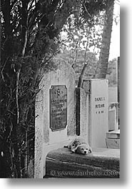 black and white, caribbean, cemeteries, cuba, dogs, graves, havana, island nation, islands, latin america, south america, vertical, photograph