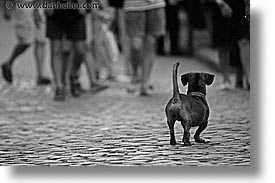 assessing, black and white, caribbean, cats, cuba, dogs, enemy, havana, horizontal, island nation, islands, latin america, south america, photograph