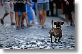 assessing, caribbean, cats, cuba, dogs, enemy, havana, horizontal, island nation, islands, latin america, south america, photograph