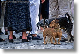butts, caribbean, cats, cuba, dogs, havana, horizontal, island nation, islands, latin america, sniff, south america, photograph