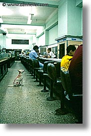 cafes, caribbean, cats, cuba, dogs, havana, island nation, islands, latin america, south america, vertical, photograph