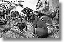 black and white, caribbean, cats, cuba, dogs, havana, horizontal, island nation, islands, junkyard, latin america, south america, photograph
