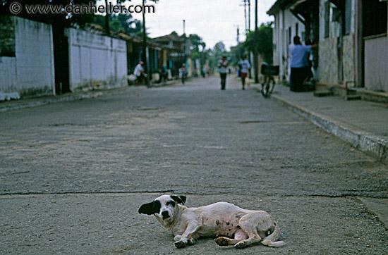 dog photo road -#main
