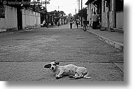 black and white, caribbean, cats, cuba, dogs, havana, horizontal, island nation, islands, latin america, laying, roads, south america, photograph