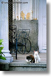 caribbean, cats, cuba, dogs, havana, island nation, islands, latin america, porch, south america, vertical, photograph
