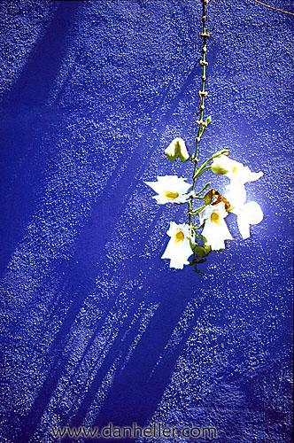 flowers-a-big.jpg
