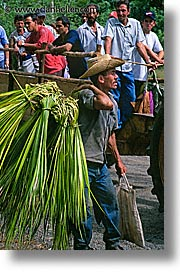 caribbean, cuba, farmers, havana, island nation, islands, latin america, men, people, south america, sugarcane, vertical, photograph