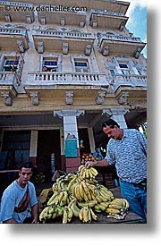 bananas, caribbean, cuba, havana, island nation, islands, latin america, picking, south america, vedado, vertical, photograph