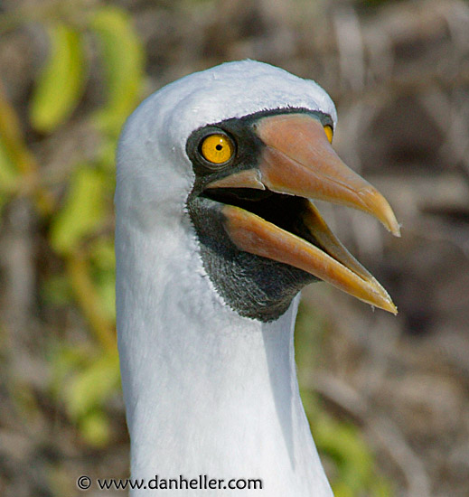 masked-head-big Galapagos Islands Map Google on maldives islands google map, netherlands google map, fiji islands google map, bahrain google map, easter island google map, ethiopia google map, alaska google map, barbados google map, iceland google map, seychelles islands google map, guam google map, baltic sea google map, new zealand google map, grenada google map, cuba google map, lebanon google map, qatar google map, hawaii google map, caribbean islands google map, aruba google map,