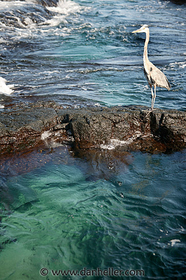 america ecuador galapagos