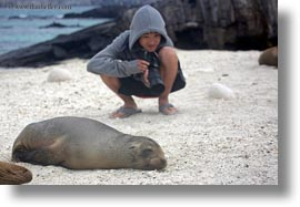 asian, cameras, ecuador, equator, galapagos islands, groups, horizontal, latin america, natural habitat, people, photographers, sea lions, tony, tourists, photograph