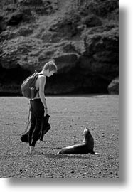babies, black and white, childrens, ecuador, equator, galapagos islands, latin america, natural habitat, people, ryan, sea lions, vertical, photograph