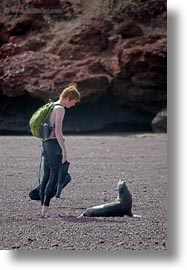 babies, childrens, ecuador, equator, galapagos islands, latin america, natural habitat, people, ryan, sea lions, vertical, photograph