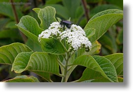 bees, ecuador, equator, flowers, galapagos islands, horizontal, latin america, miscellaneous, plants, photograph