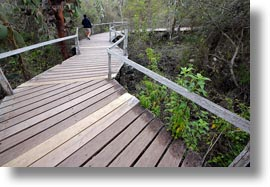 darwin center, ecuador, equator, galapagos islands, horizontal, latin america, planks, santa cruz, walkway, woods, photograph