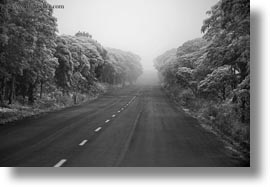 black and white, ecuador, equator, foggy, galapagos islands, gemelos sink hole, horizontal, latin america, roads, santa cruz, photograph