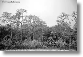 black and white, ecuador, equator, foggy, galapagos islands, gemelos sink hole, horizontal, latin america, santa cruz, trees, photograph