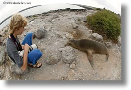 childrens, ecuador, equator, galapagos islands, horizontal, latin america, sea lions, sea lions and people, photograph