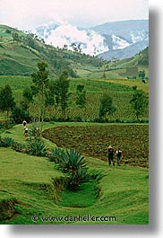ecuador, equator, fields, highlands, hiking, latin america, vertical, photograph