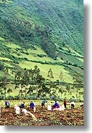 ecuador, equator, fields, highlands, latin america, vertical, work, photograph