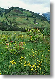 ecuador, equator, highlands, latin america, scenics, vertical, photograph