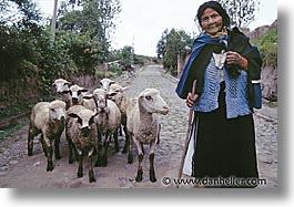 ecuador, equator, horizontal, latin america, people, sheep, womens, photograph