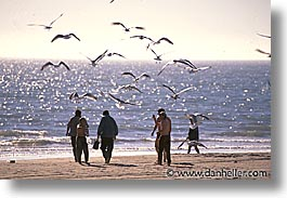 beaches, birds, horizontal, latin america, mexico, people, punta chivato, photograph