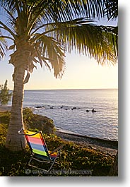 chairs, latin america, mexico, palms, punta chivato, vertical, photograph