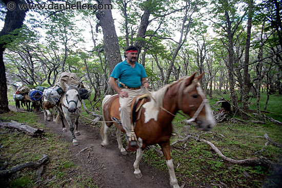 Horse In Latin Horses