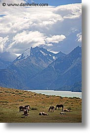 animals, horses, latin america, mountains, patagonia, vertical, photograph